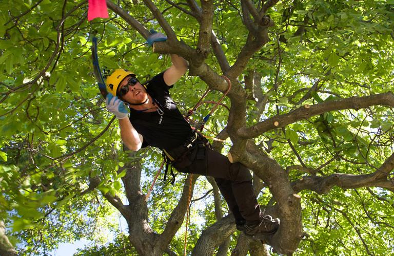 Lower North Island Regional Tree Climbing Competition