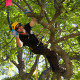 Lower North Island Regional Tree Climbing Competition