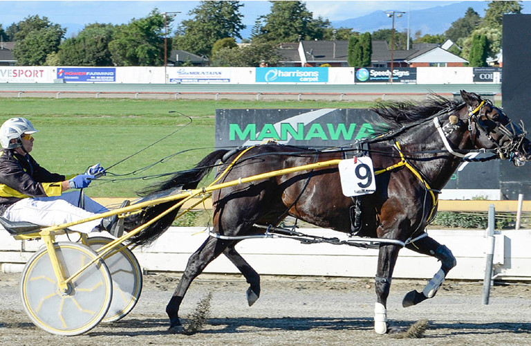 New Zealand Harness Racing Gearing Up Championship