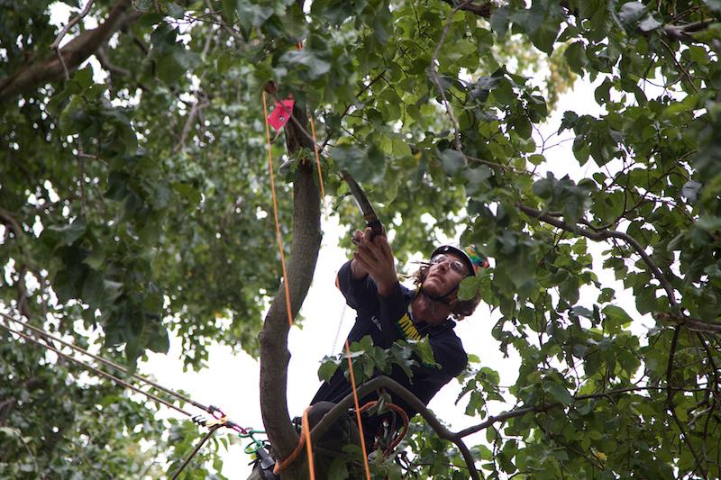 Speed Tree Climbing NEWS